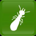 diag_termites